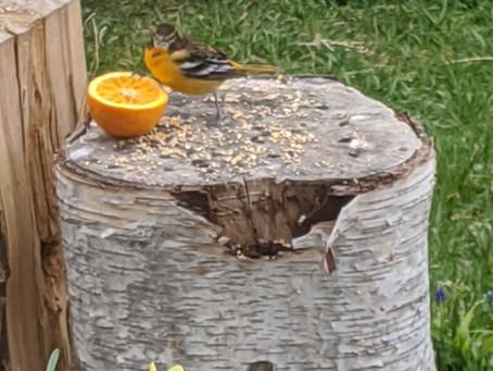 Birding on the Bruce