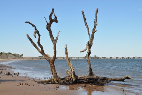 Exploring Boneyard Beach Big Talbot Island