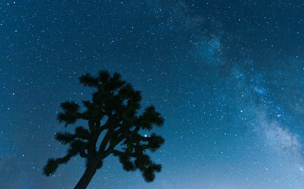 Joshua Tree under the Milky Way