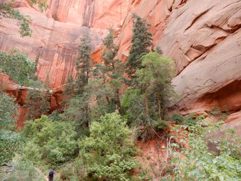 Hiking Taylor Creek Trail Zion