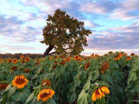 Exploring Tecumseh Land Trust