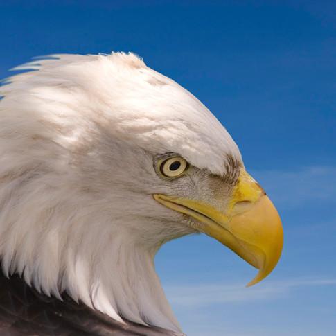 CA Wildlife Services Program