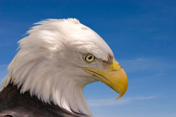 Bald Eagle Appreciation Day