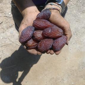 תמרים ופירות יבשים
