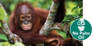 Do you use Palm Oil in any recipes?
