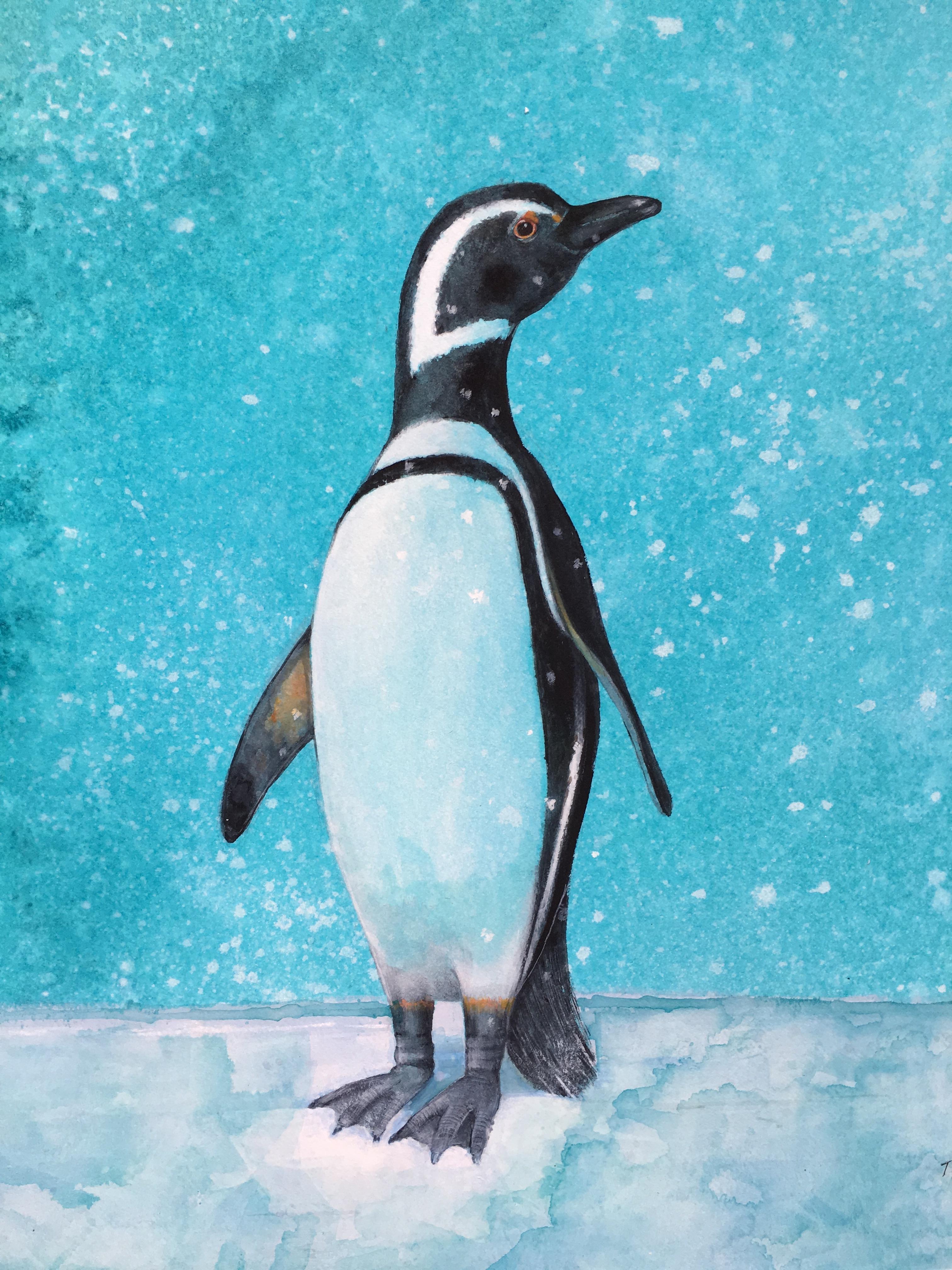 The Magellanic Penguin - Linda Owen