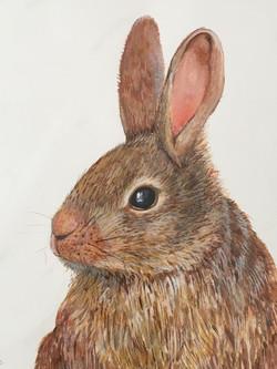 Rabbit! - Linda Owen