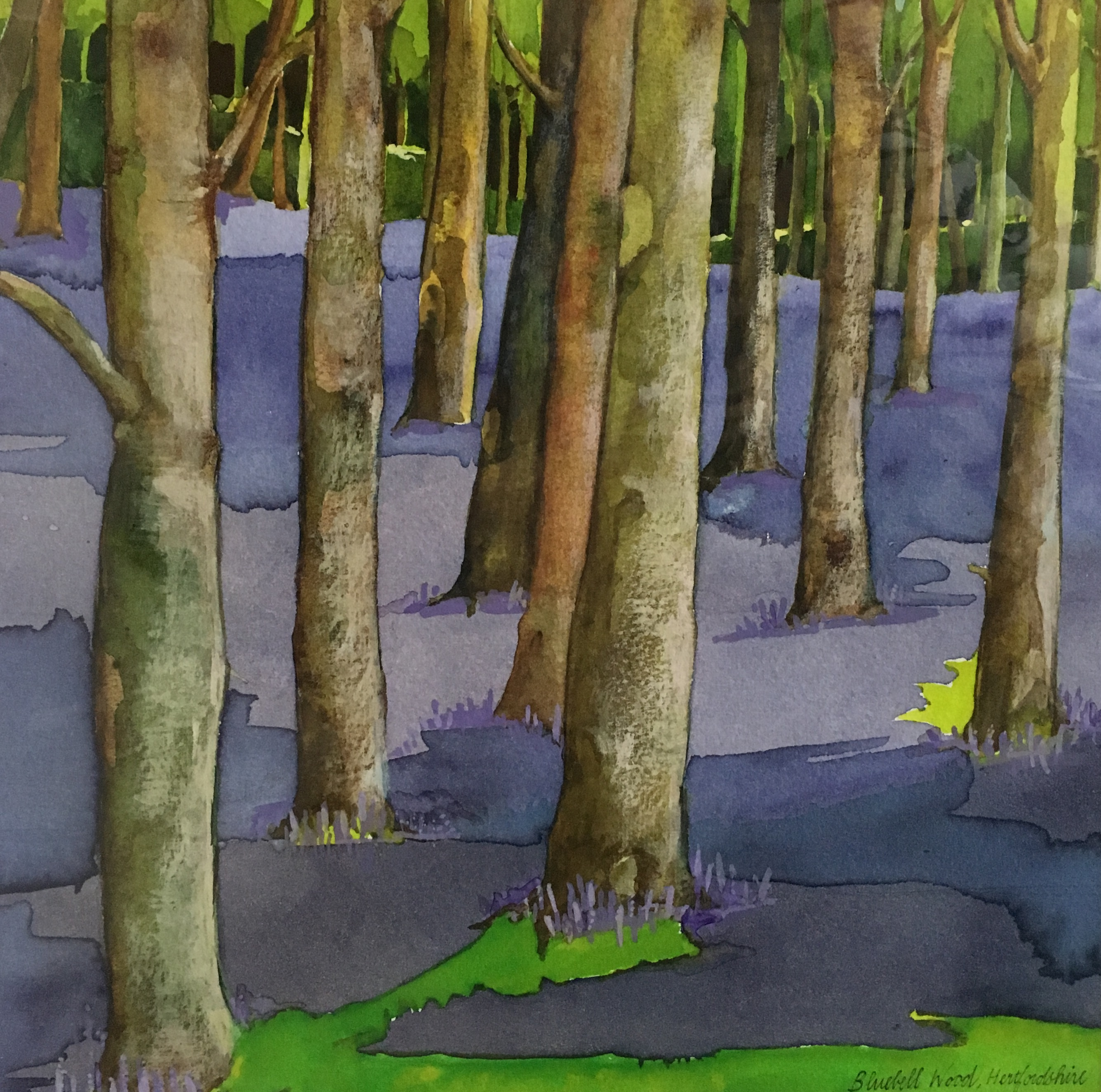 Bluebell Wood, Hertfordshire