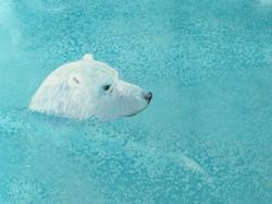 Polar Bear in Arctic Waters - Linda Owen