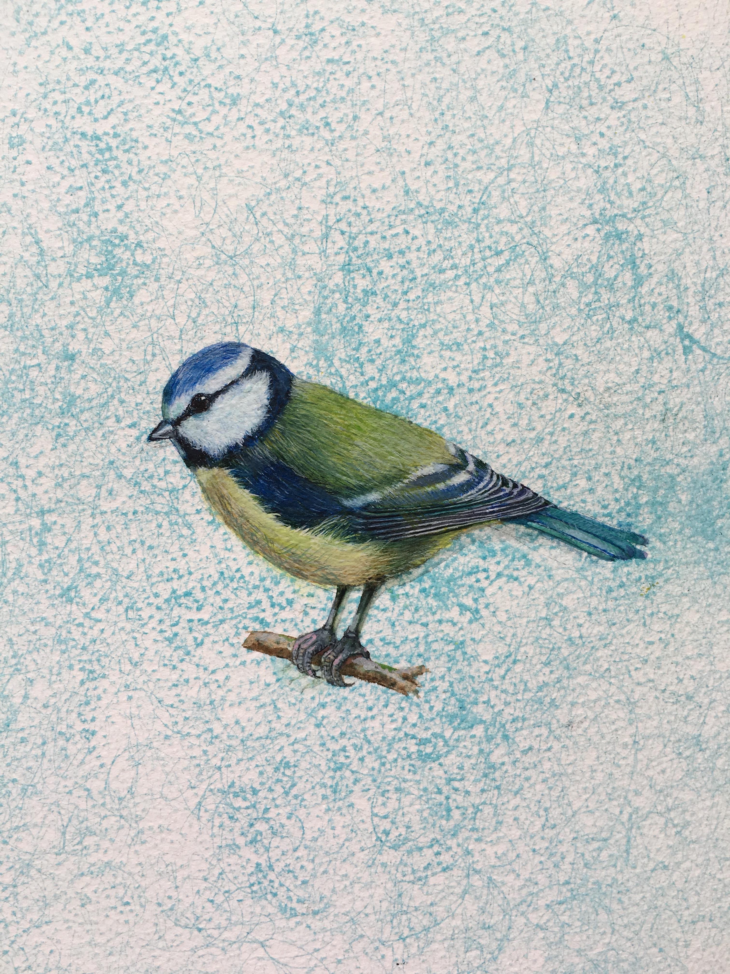 Blue Tit - Linda Owen