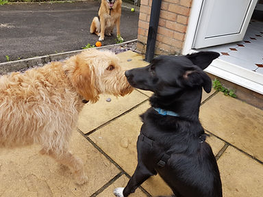 Alfie and Scout in day care 2