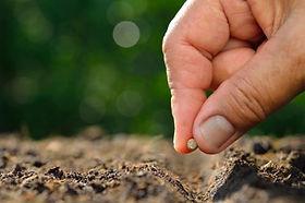 venta-de-semillas-ecologicas-en-murcia.j