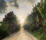 A path to the new day.jpg