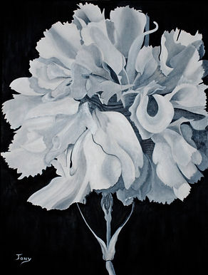 White Carnation 30x40 Mixed media on can
