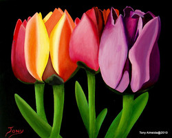 Tulips Together 2