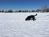 IPO Tracking Wichita KS, Schutzhund Tracking Wichita KS, IPO Tracking Wichita, Schutzhund Tracking Wichita, Dutch Shepherd Tracking Kansas, Schutzhund Training Wichita, IPO Training Wichita
