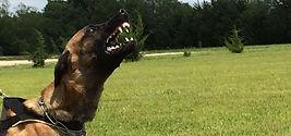 Schutzhund Protection Training Wichita KS, IPO Protection Training Wichita KS, Schutzhund Training Wichita, IPO Training Wichita, Protection Training Wichita, Protection Dog Training Wichita