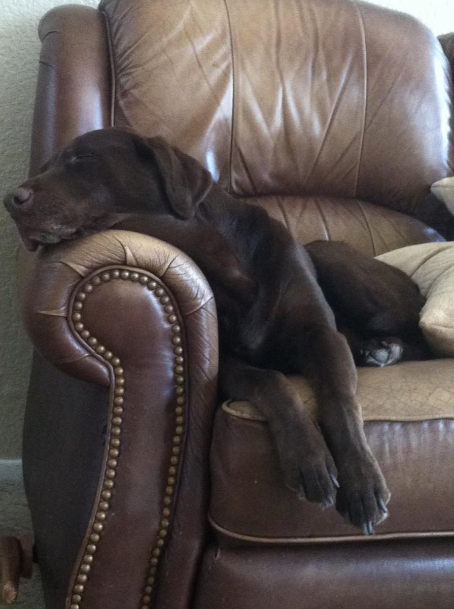Ziva relaxing