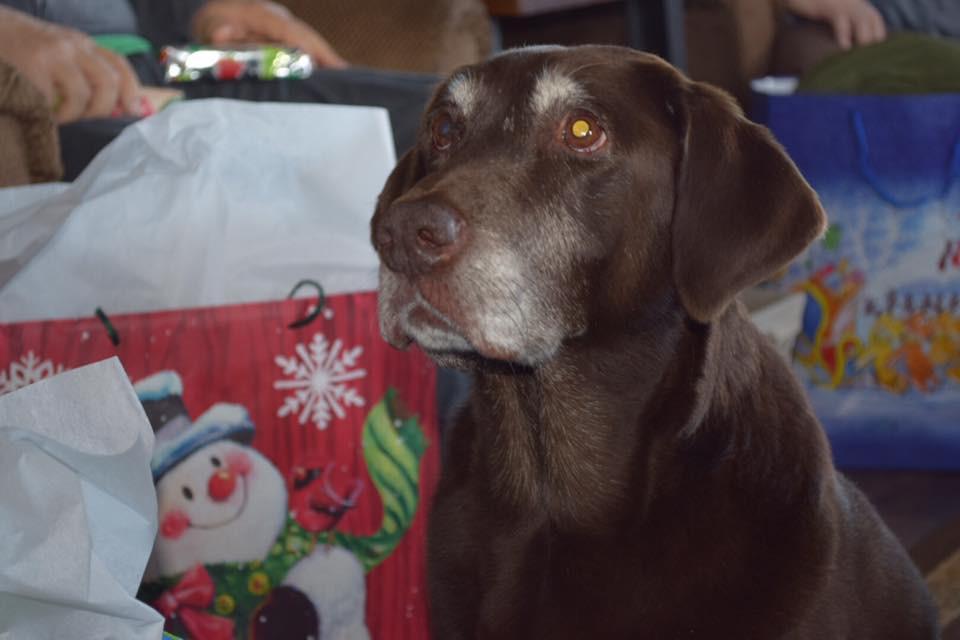Ziva enjoying her Christmas
