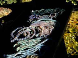 Facet Opal Beads