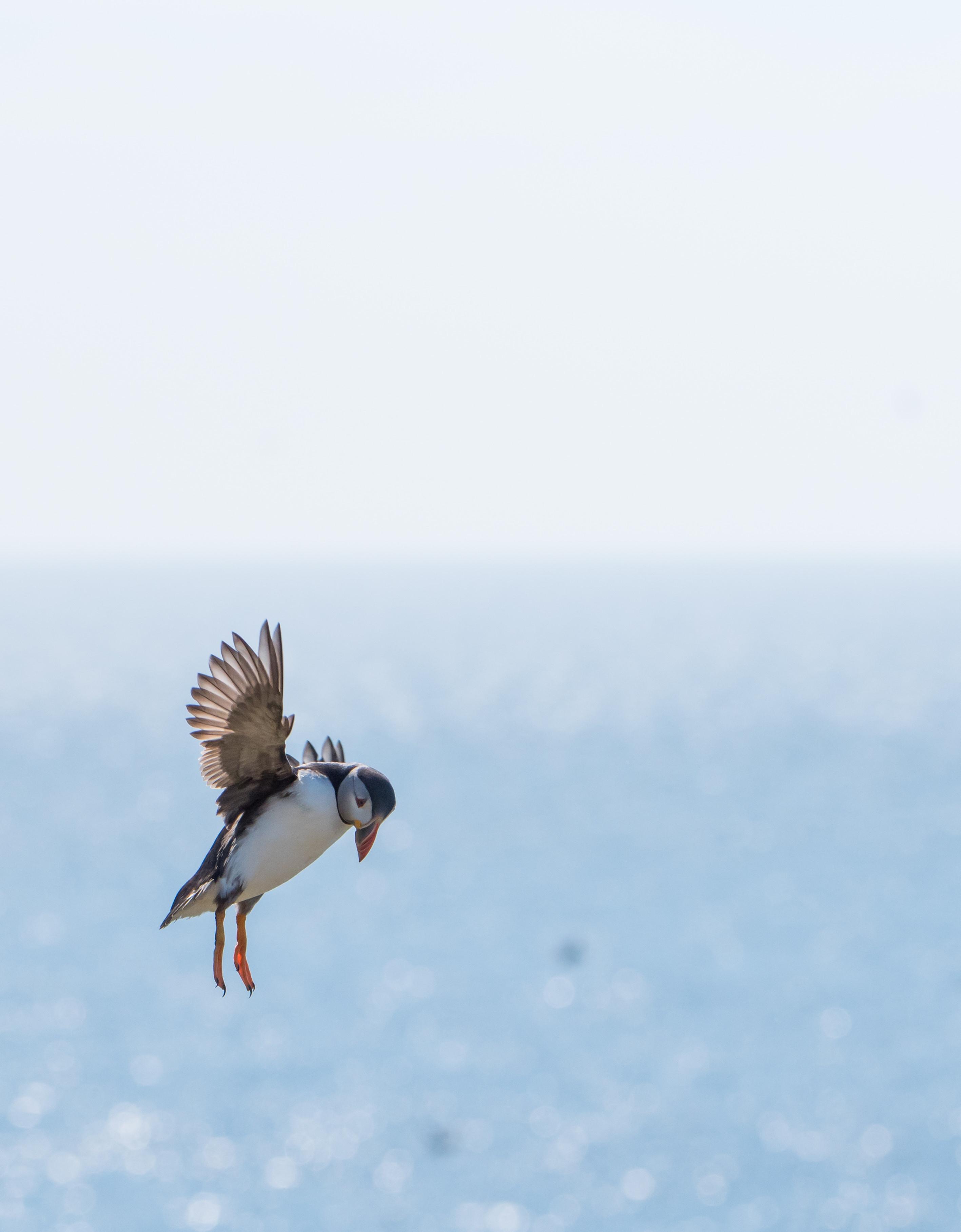 Marine Life Photography