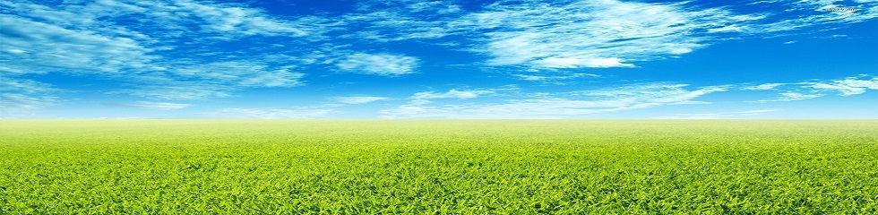 трава и небо_б.jpg