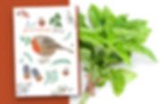 PortPage_CARDS_Markos-seeds.jpg