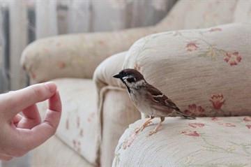 Птица, проклятая Богом: к чему залетает воробей в дом и как нейтрализовать дурную примету?