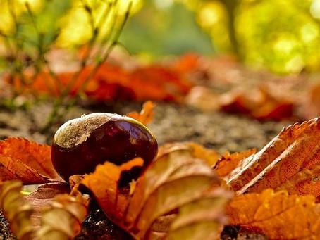 Осенние подарки с магическими свойствами