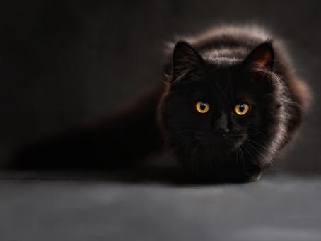 Как кошки влияют на энергетику дома и почему эти животные обладают магическими свойствами