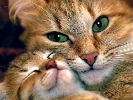 Кошки – посланцы с Сириуса?