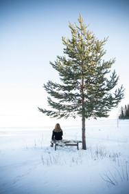 Anna Sellén träd