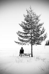 Anna Sellén träd sv