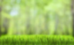 lawn-care-background-4.jpg