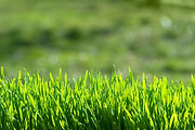 grass-background-image-for-cut-n-care.jp