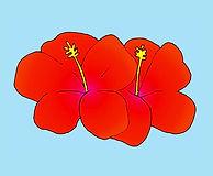 Hybiscus2.jpg