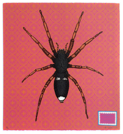 Incy Wincy Spider - White Tailed Spider
