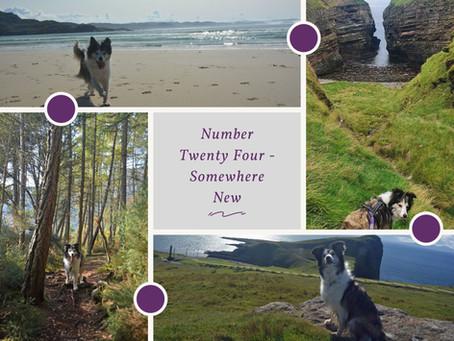 Enrichment Guide........Number Twenty Four
