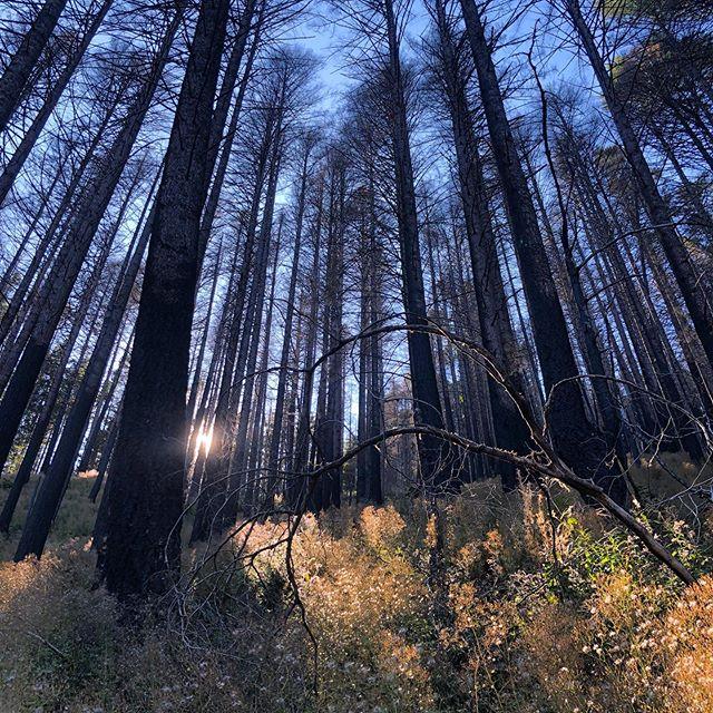 Stillness & Sunlight