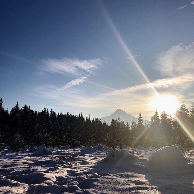 Sunshine, snow & the scent of fresh pine
