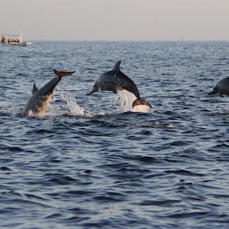 Dolphin & Whale Tour.jpg