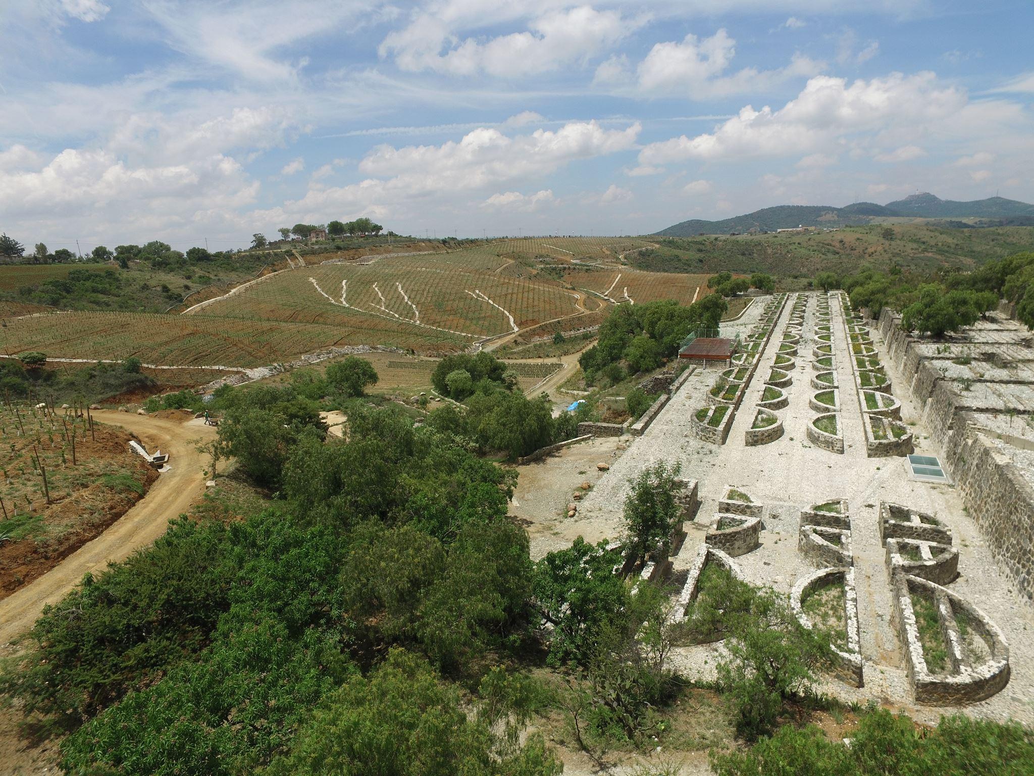 Caminos D' Vinos Vineyard