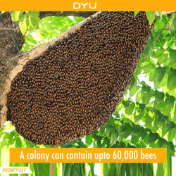 One Big Colony