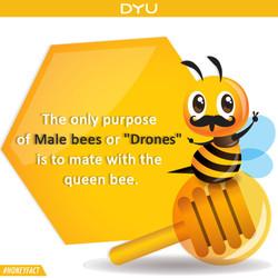Queen bee partners