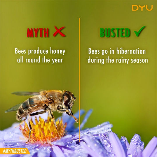 Is honey perennial, Natural Honey, Pure Honey, DYU Pure Artisanal honey, DYU Pure Raw honey, Western ghats honey, Apis Cerana Honey, Indian Native honey bee honey
