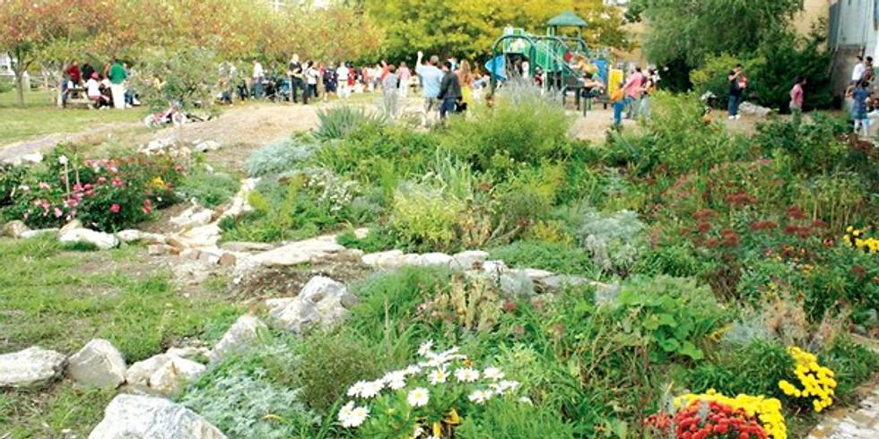 Volunteer in Liberty Lands Park