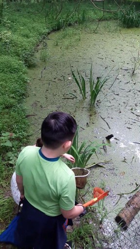 Catching Frogs, candid