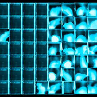 Negative Blue Rat Grid #29