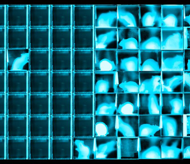Negative Blue Rat Grid #29