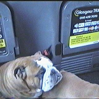 A City Named Dog,  2019. VHS / Digital Video 40:12